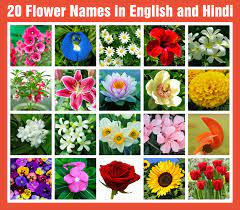 20 flowers name in english and hindi