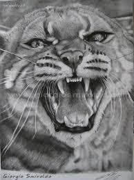 Disegno A Matita Animali Wild Cat Art Disegni Disegni A Matita