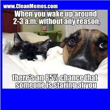 Cat Memes | Clean Memes – The Best The Most Online via Relatably.com
