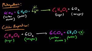 biology lecture 31 photosynthesis and cellular respiration