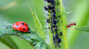 top 6 beneficial insects that will help your garden