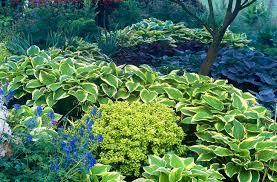 showy shade garden ideas the garden glove