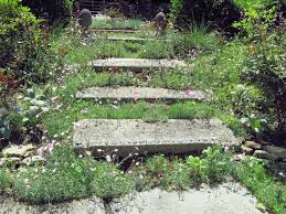 i love the dianthus and other small plants growing around these concrete paver steps photo