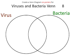 Bacteria And Viruses Venn Diagram Venn Diagram Of Bacteria And Viruses Magdalene Project Org