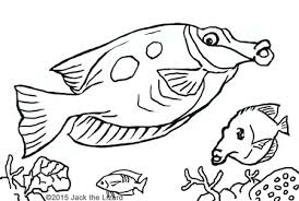Small Picture Animal Coloring Pages Jack the Lizard Wonder World