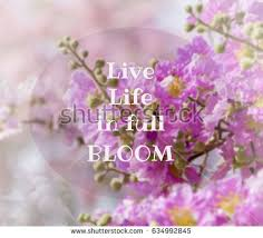 Flowers Quotes Magnificent Inspirational Quote On Blurred Flowers Background Stock Photo Edit