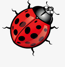 Bug Clipart Png Transparent Background Pngtree Cartoon Red Bug Cartoon Clipart Bug Png Image And Clipart Red Bug