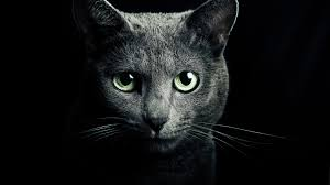 black cats with green eyes wallpaper. Wonderful Eyes Blackcatswithgreeneyeswallpaper1jpg In Black Cats With Green Eyes Wallpaper A