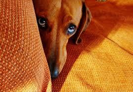 Αποτέλεσμα εικόνας για dog innocent look