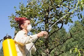 best garden sprayer. Best Garden Sprayer - Woman Spraying Trees