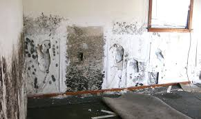 what kills mold on walls removing mould how to remove black from carpet and killing mold inside walls