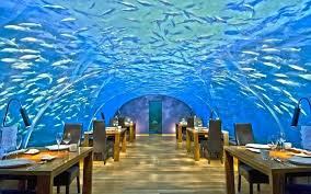 underwater restaurant disney world. The Underwater Dining Experience In Maldives Restaurant Disney World