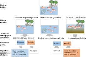 Murray Cod Growth Chart The Assessment Of Fishery Status Depends On Fish Habitats
