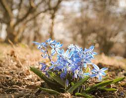 Spring Flowers Wallpaper Hd Natures ...