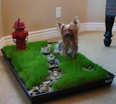 dogs bathroom grass. the pet patch - buy potty product on alibaba.com dogs bathroom grass
