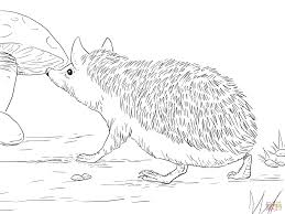 Small Picture Hedgehog coloring pages Free Coloring Pages