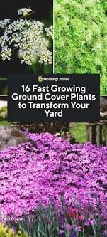 16 fast growing ground cover plants to