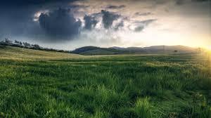 grass field. Grass, Field, Rain, Nature Wallpapers HD / Desktop And Mobile Backgrounds Grass Field