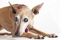 senior dog care 04 my dog s ps