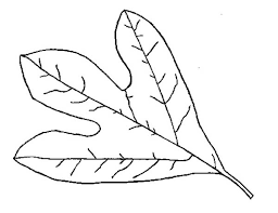 Small Picture Autumn Leaf Coloring Page Download Print Online Coloring Pages