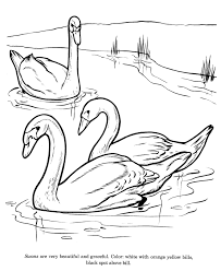 Small Picture Animal Drawings Coloring Pages Swan bird identification drawing