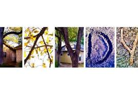 Word Of Nature Take Pictures Of Nature That Spell Out Your Name Word Of Choice By