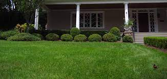 lawn care tips for winter in watchung