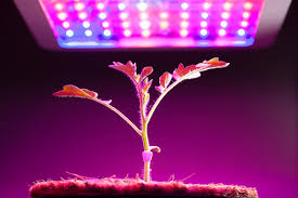 How Close To Keep Led Grow Lights Grow Lights For Indoor Plants And Indoor Gardening An