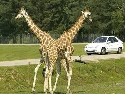 zoosafari de thoiry site touristique à