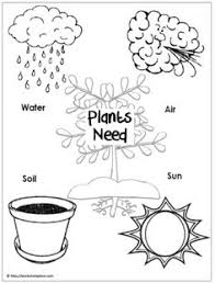 Small Picture Plant Labeling Worksheet Freebie Teach your students about the