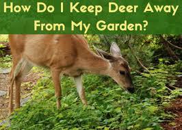 deer repellent for gardens.  Gardens How To Deter Deer To Deer Repellent For Gardens