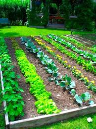 Small Picture Free Vegetable Garden Planner By Zip Code The Garden Inspirations