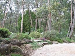 garden leading into the bush