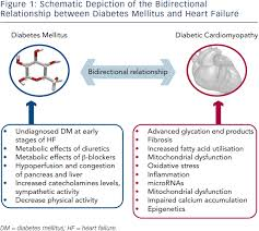 Pathophysiology Of Chf Diabetes Mellitus And Heart Failure