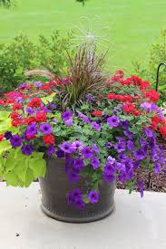 red purple flowers in a container with purple fountain gras beautiful planter