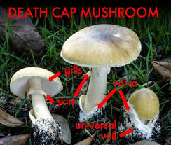 Florida Mushroom Identification Chart 3 Edible Mushrooms That Are Easy To Find And How To Avoid