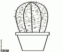 Kleurplaat Een Kleine Cactus In Een Bloempot Kleurplaten