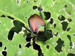 garden pest. Garden Pests Pest A