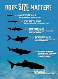 Shark Size Chart