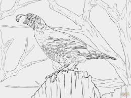 Realistic Bird Coloring Pages Fresh Drawing At Chronicles Network