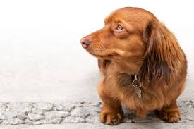 <b>Winter</b> Care - Coat Conditioning For Your Pet   Pune365