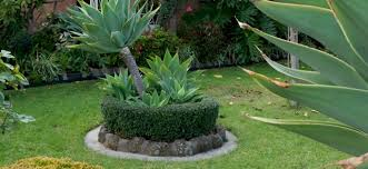 Small Picture Round Box Hedge Garden Idea Garden Ideas Hello Hello Plants