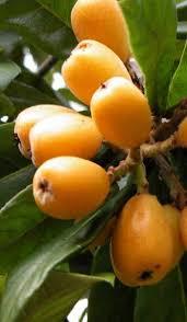 Do Bonsai Fruit Trees Produce Fruit  National Bonsai FoundationPlum Tree Flowers But No Fruit