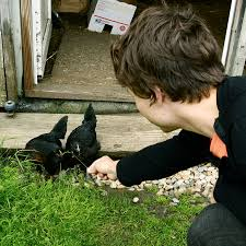 Image result for feeding chickens