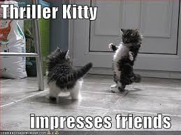 cute kittens quotes for kids. Simple Quotes Funny Cute Kittens And Cute Kittens Quotes For Kids R