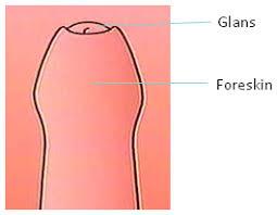 Male Circumcision  An Appraisal of Current Instrumentation  PDF     Health