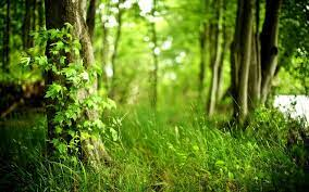 Nature tree, Forest wallpaper