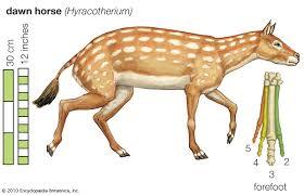 Horse Size Comparison Chart Eohippus Size Facts Britannica
