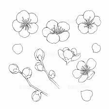 梅の花素材線画の画像素材31252587 イラスト素材ならイメージナビ