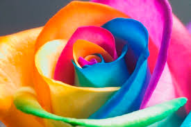 The Meaning Behind Flower Colors Bloomnation Blog